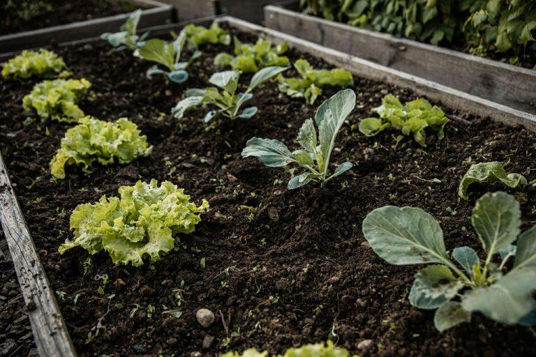 Kaj sejemo, sadimo in urejamo na vrtu septembra
